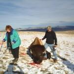 Hunter With Bow Looking at Buffalo