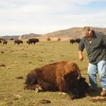 Hunter Approaching Buffalo